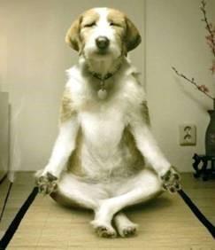 hond-aan-het-mediteren.